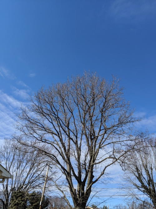 a bare tree silhouetted against a blue spring sky